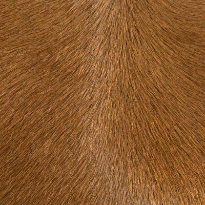 Hair-on-Hide Pony